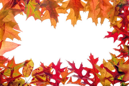 fall leaves frame on white background Stock Photo - 2052947