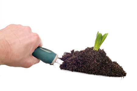 shovel in dirt: male hand holding shovel with soil and plant isolated on white