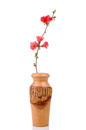 red and fresh fruit-tree flower in wooden vase isolated on white Stock Photo - 2533749