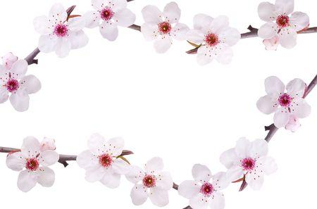 frame spring background of pink fruit-tree flowers