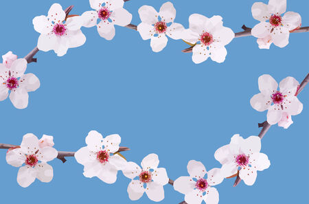 vector  spring fruit-tree flowers background Vector