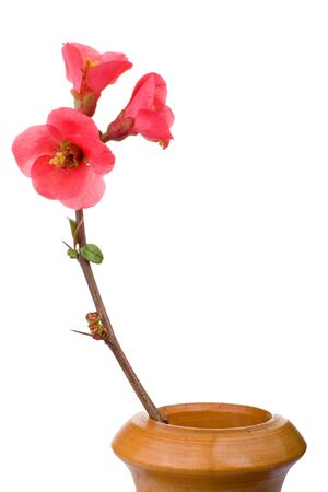 fruit tree branch with red flowers in wooden vase Stock Photo - 2564645