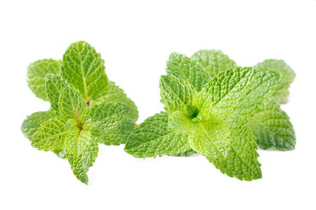 mentha: dos tallo de menta Mentha spicata aisladas en blanco