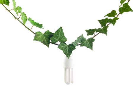 eco light bulb suspended on ivy branch as a flower Stock Photo - 4232543