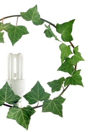 eco fluorescent lamp blooming on ivy branch Stock Photo - 4232550