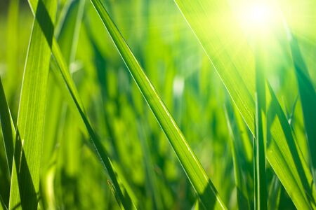 closeup on fresh spring grass with warm sunlight photo