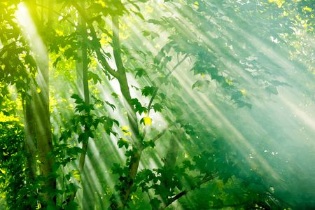 sunrays: mist sunbeams through trees in fairy forest
