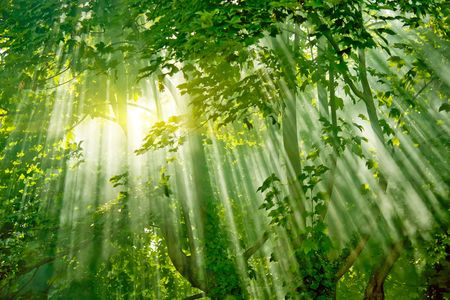 magic sunlight in fresh misty forest  Stock Photo