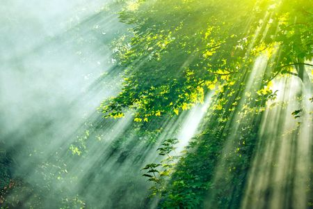 radiance: dense sunbeams through trees in forest Stock Photo