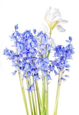 beautiful bunch of spring flowers hyacinths and white iris photo