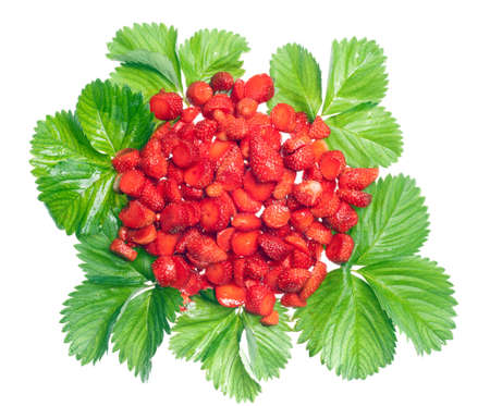 disposed: vivid strawberries disposed on leaves and isolated on white Stock Photo