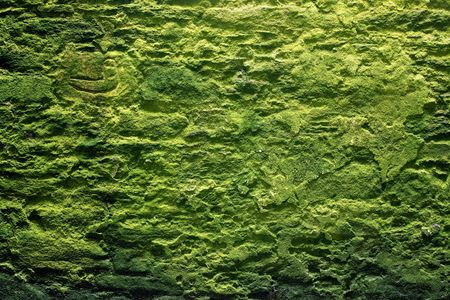 old stone wall with vivid moss photo