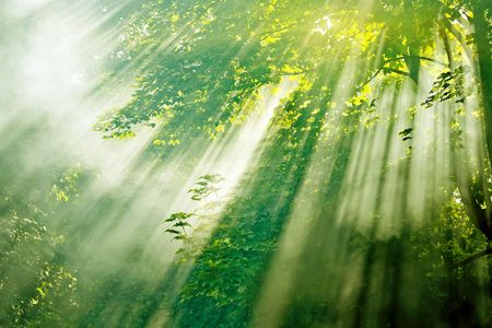 beautiful magical sunlight in misty forest  photo
