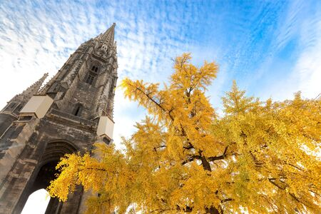 gingko: Bordeaux cathedral spire behind gingko tree with yellow leaves.
