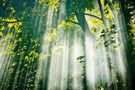 beautiful sunlight filtering through trees in summer morning Stock Photo