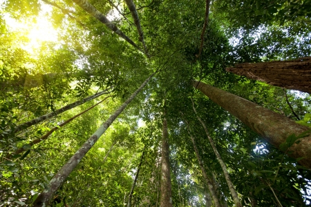 low angle dynamic view of tropical rainforest in tioman island, malaysia photo