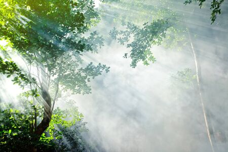 tropical evergreen forest: morning sunbeam in tropical fairy forest with smoke, ko laoliang island, thailand