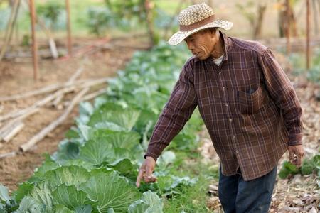 berza: granjero tailand�s mostrando Col org�nico crece en el jard�n, provincia de chiang rai, Tailandia