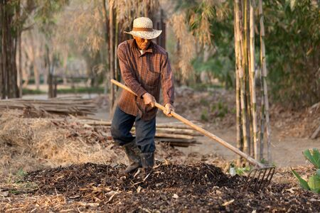 asian gardening: asian farmer raking soil and dry leaves to make organic compost, Thailand