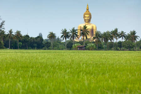 rice field  and wat muang giant buddha in angthong province, thailand photo