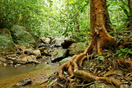 large rock: big tree roots and river in tropical rainforest, kaeng krachan national park, thailand Stock Photo