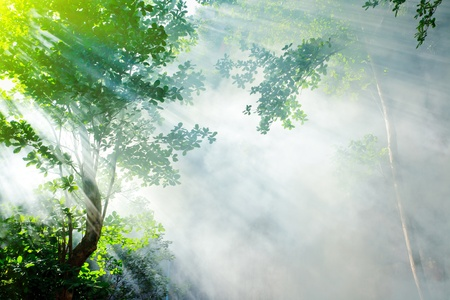 tropical evergreen forest: morning sunshine and smoke in tropical rainforest