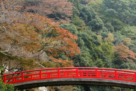 japanese maples: Japanese fall colors in mino park, Osaka, Japan Stock Photo