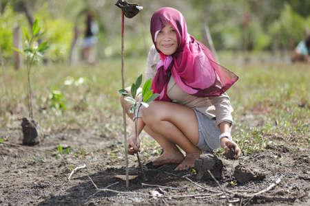 mud woman: thai woman planting new mangrove tree in forest, satun, Thailand