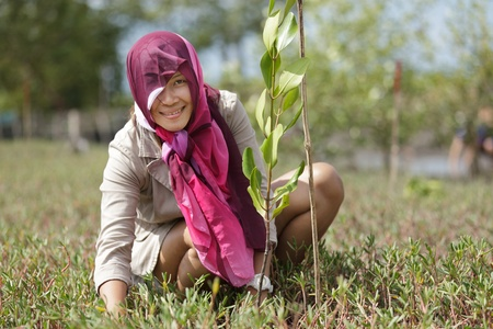 thai woman planting new mangrove tree in forest, satun, Thailand photo
