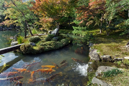 Tenryuji temple zen garden with koi carps, Kyoto, Japan