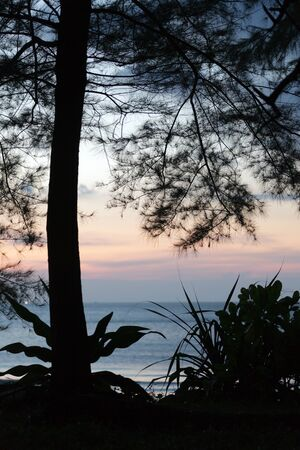 pine tree silhouette: backlit tropical tree silhouette at dusk, ko Tarutao island, Thailand Stock Photo