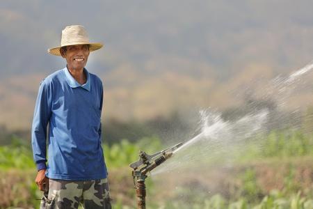タイのアジア農民文化に水をまくタバコ畑で