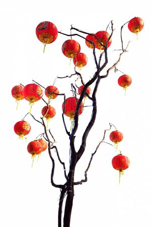 chinese lantern tree isolated on white background Stock Photo - 13697381
