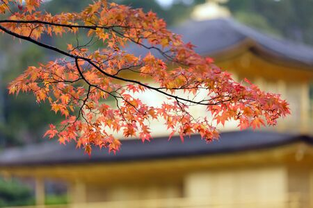 japanese autumn colors in Kinkakuji garden photo