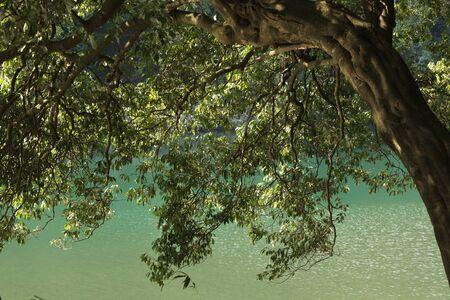 bending over: tree bending over river, Japan