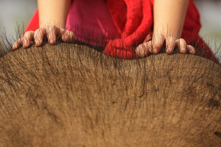 child on asian elephant head, focus on hands photo