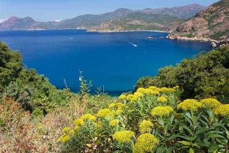 corse: Porto bay seascape in Corsica island, France