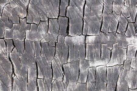 Eucalyptus tree cut trunk background Stock Photo - 15057887