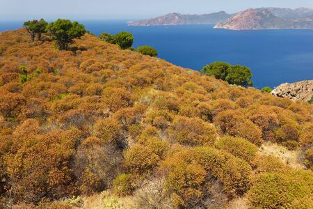 wild Mediterranean coastline in Corsica island, France photo