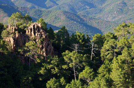 mediterranean forest: rocky mountain pine forest in Corsica island, France