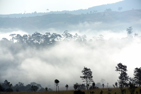 Morning fog in tropical pine forest, Thailand photo