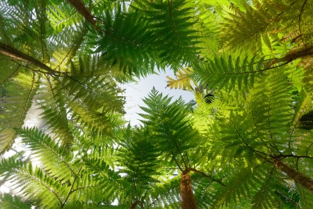 Tropical tree fern background photo