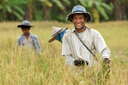 農家: 幸せなタイの農夫家族で稲刈り。