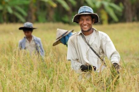 Happy thai farmer harvesting rice with family.