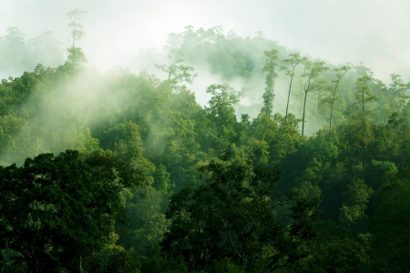 Misty morning in tropical rainforest, Thailand photo