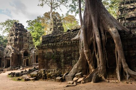 Huge Banyan tree roots entangling Ta Promh temple walls, Angkor, Cambodia photo