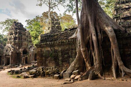 siem reap: Huge Banyan tree roots entangling Ta Promh temple walls, Angkor, Cambodia