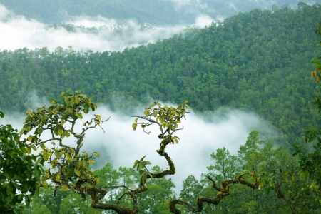 doi: Rainforest landscape in Morning fog, Doi Kiew Lom viewpoint, Pangmapha, Thailand