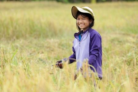 Girl harvesting ripe rice in field, Thailand photo