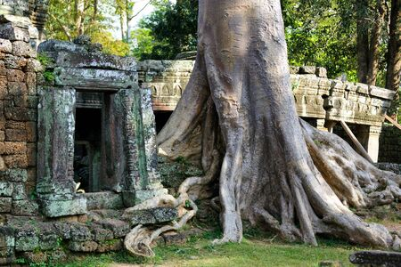 ficus: Door and banyan tree roots in Banteay Kdei temple, Angkor, Cambodia Stock Photo